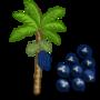 Acai Tree 棕櫚樹