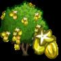 Starfruit Tree 楊桃樹