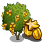 Golden Starfruit Tree