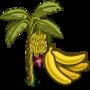 Banana Tree 香蕉樹