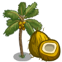 Golden Malayan Coconut Tree