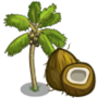 Coconut Tree 椰子樹