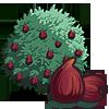 Fig Tree 無花果樹