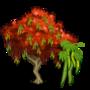 Gulmohar Tree 鳳凰木(高莫哈樹)