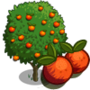 Blood Orange Tree