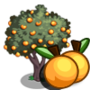 Peach Tree 桃樹
