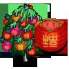 Chinese Lantern Tree 中國燈籠樹
