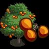 Persimmon Tree 柿子樹