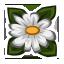 qh_daisies.png