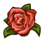 qh_carnations.png