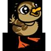 Duckling 小鴨