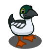 Goldeneye Duck  鵲鴨
