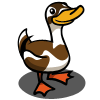 Indian Runner Duck 印度跑鴨
