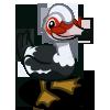 Muscovy Duck 番鴨