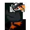 Scoter Duck 海番鴨