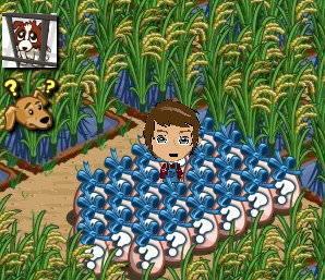FarmVille 100505