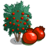 Angel Red Pomegranate Tree