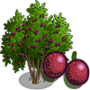 Passion Fruit Tree 百香果樹