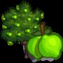 Lime Tree 萊姆樹(菩提樹)