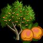Apricot Tree 杏樹