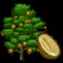 Chanee Durian Tree