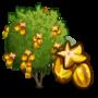 Golden Starfruit Tree