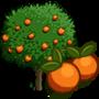 Orange Tree 橘子樹
