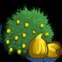Alma Fig Tree