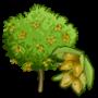Almond Tree 杏仁樹