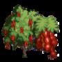 Amherstia Tree
