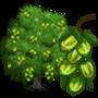 Arjuna Tree