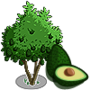 Avocado Tree 酪梨樹