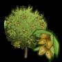 Dwarf Almond Tree