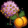 Golden Plum Tree