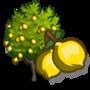 Ponderosa Lemon Tree