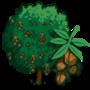 Walnut Tree 核桃樹