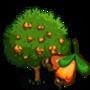 Wild Cashew Tree