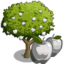 White Apple Tree 白蘋果樹