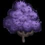 Jacaranda Tree 藍花楹樹