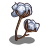 (Cotton Seed).png