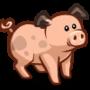 Pig 豬