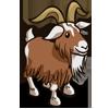 Goat 山羊