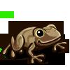 Peeper Frog 青蛙