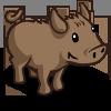 Island Pig 島嶼豬