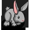 Gray Rabbit 灰兔