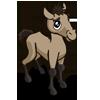 Foal Mustang 小野馬