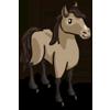 Wild Mustang 野馬