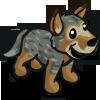 Heeler Gray 灰牧牛犬