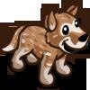 Heeler Brown 棕牧牛犬
