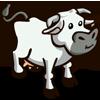 Tuscan Cow 托斯卡納牛